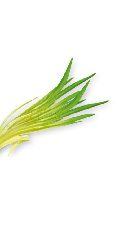 lemongrass links test2